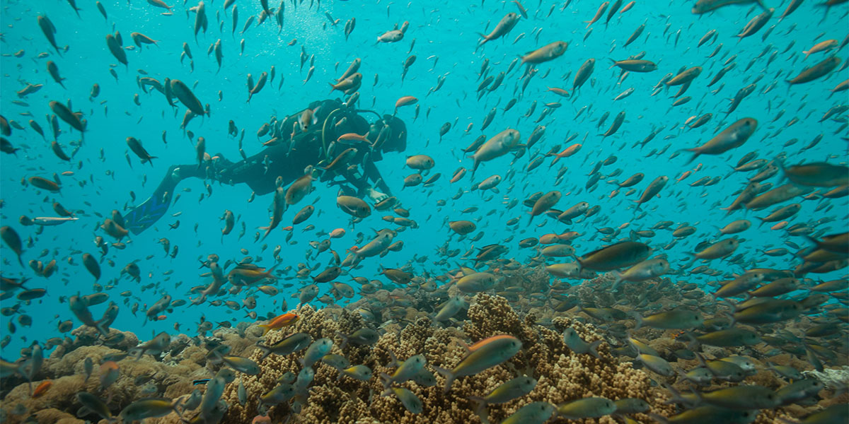 Practice scuba diving and swim among colourful fishes in Zanzibar