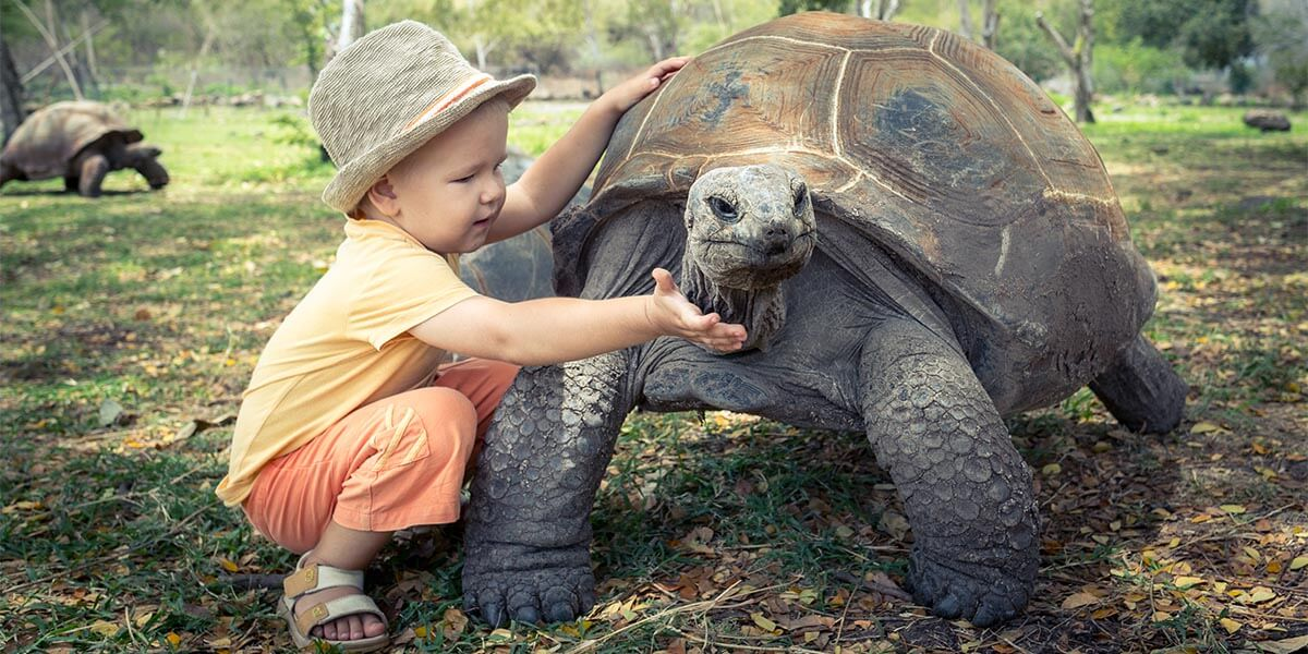 If any adult get impressed by Aldabra giant tortoises, you can imagine how a kid will live that experience!